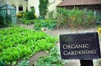 organic-gardening-thumb73047 (1)