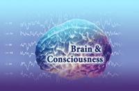 brain-consciousness41078